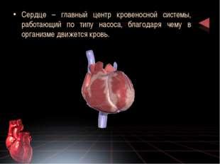 Сердце – главный центр кровеносной системы, работающий по типу насоса, благод