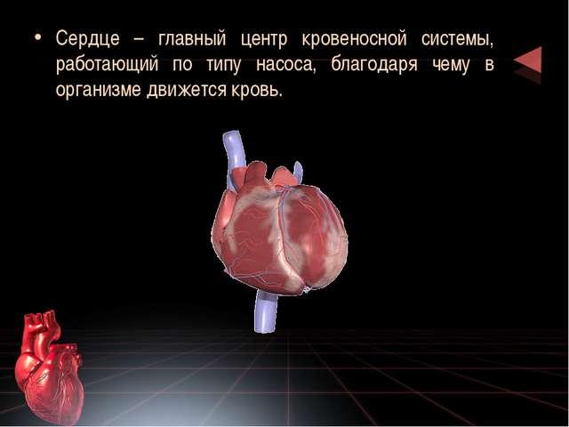 Сердце – главный центр кровеносной системы, работающий по типу насоса, благод...