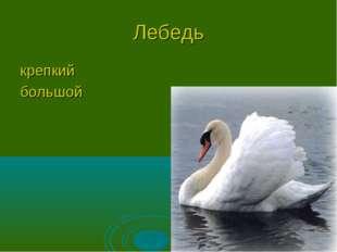 Лебедь крепкий большой