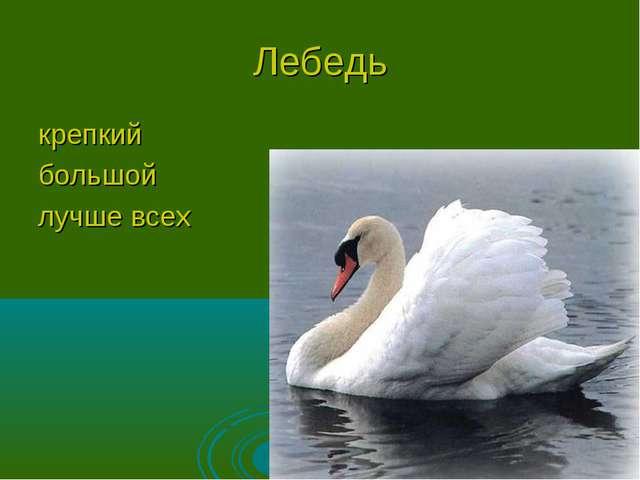 Лебедь крепкий большой лучше всех