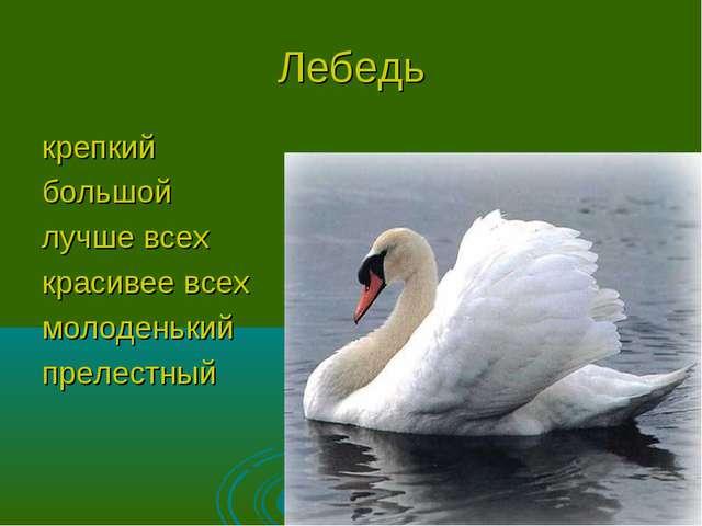 Лебедь крепкий большой лучше всех красивее всех молоденький прелестный