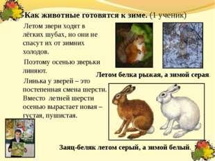 Как животные готовятся к зиме. (1 ученик) Летом звери ходят в лёгких шубах, н