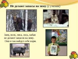 Не делают запасы на зиму (2 ученик) Заяц, волк, лиса, лось, кабан не делают з