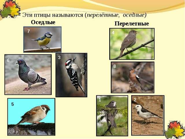 Оседлые Перелетные 1 2 3 4 5 6 7 8 - Эти птицы называются (перелётные, оседл...
