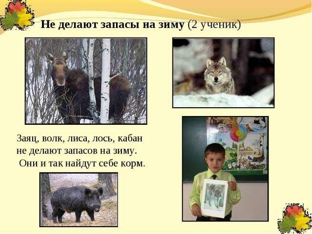 Не делают запасы на зиму (2 ученик) Заяц, волк, лиса, лось, кабан не делают з...