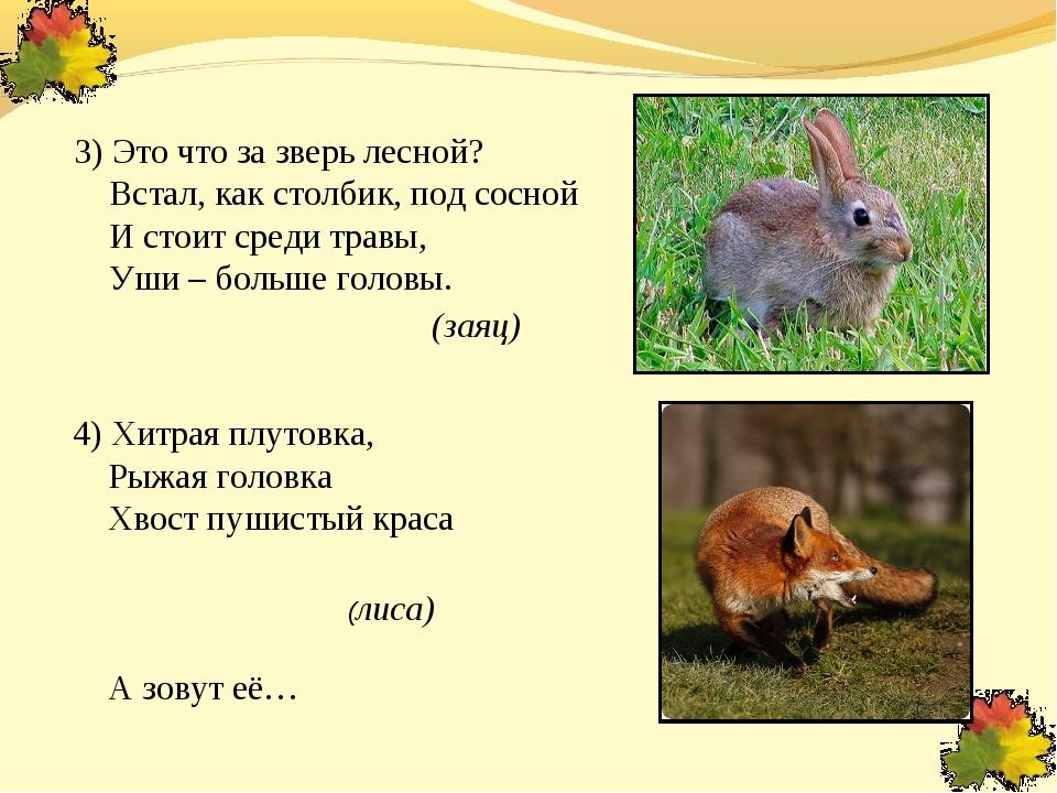 3) Это что за зверь лесной? Встал, как столбик, под сосной И стоит среди тра...