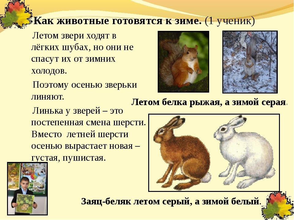 Как животные готовятся к зиме. (1 ученик) Летом звери ходят в лёгких шубах, н...