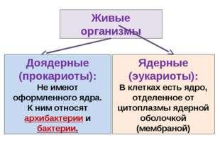 Живые организмы Ядерные (эукариоты): В клетках есть ядро, отделенное от цитоп