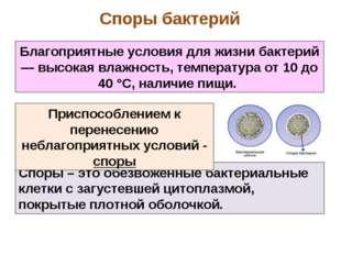 Споры – это обезвоженные бактериальные клетки с загустевшей цитоплазмой, покр