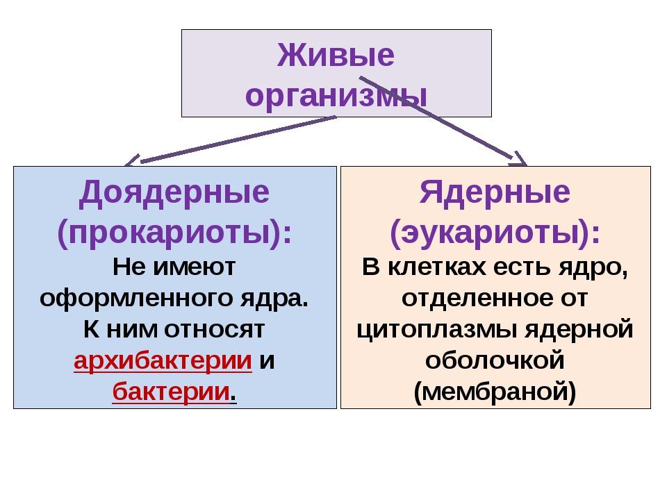 Живые организмы Ядерные (эукариоты): В клетках есть ядро, отделенное от цитоп...