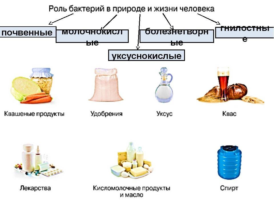 почвенные уксуснокислые болезнетворные гнилостные молочнокислые