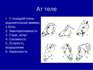 Ат теле У лошадей очень выразительная мимика 1.Боль 2. Заинтересованость 3. С