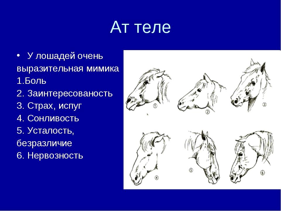 Ат теле У лошадей очень выразительная мимика 1.Боль 2. Заинтересованость 3. С...