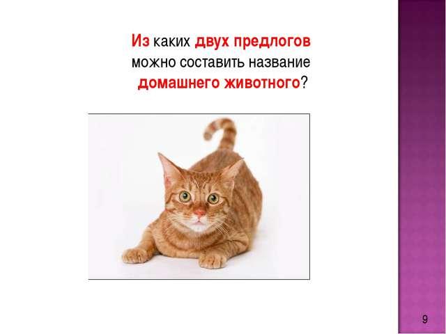 9 Из каких двух предлогов можно составить название домашнего животного?