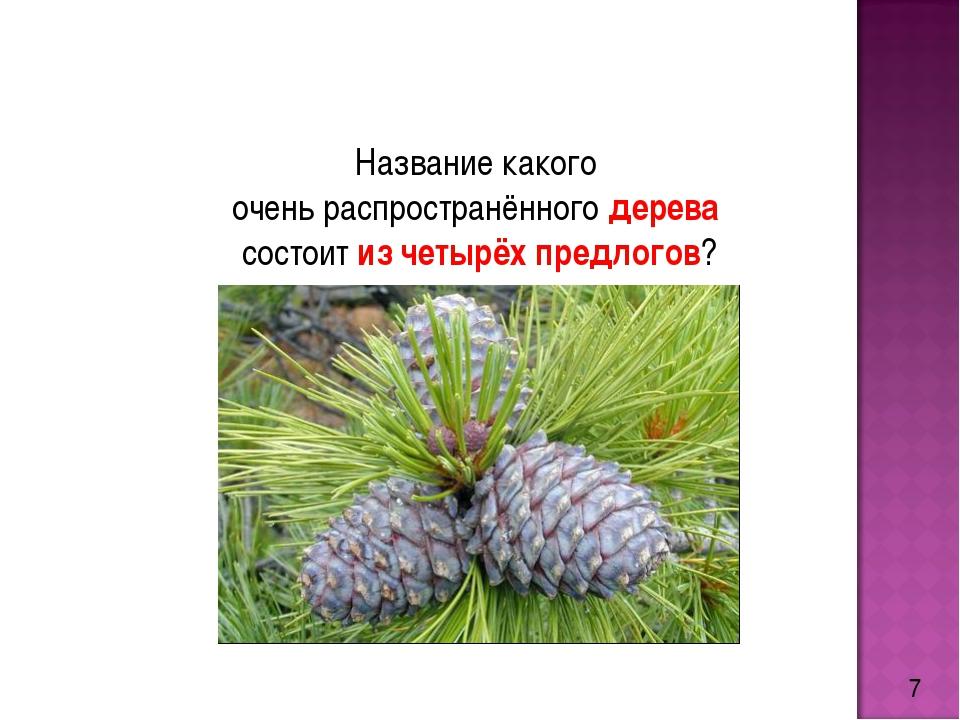 7 Название какого очень распространённого дерева состоит из четырёх предлогов?