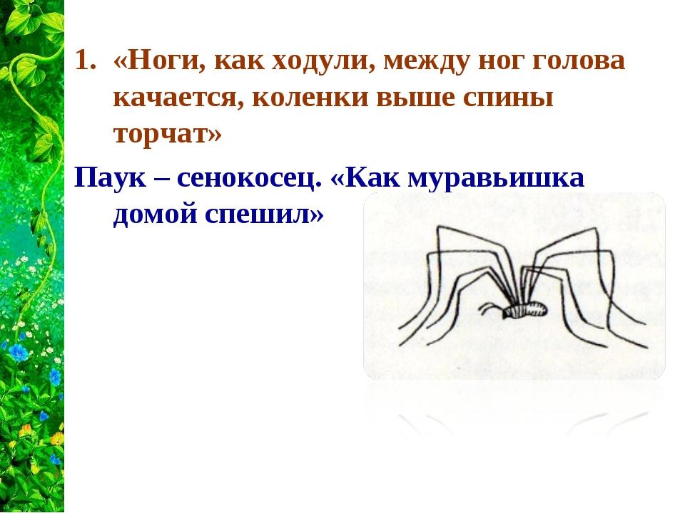 «Ноги, как ходули, между ног голова качается, коленки выше спины торчат» Паук...