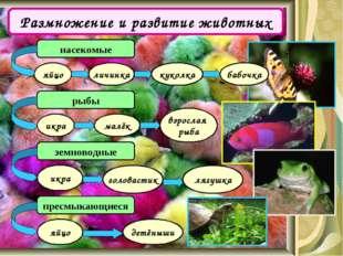 Размножение и развитие животных насекомые рыбы яйцо личинка куколка бабочка и