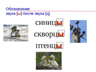 Обозначение звука [ы] после звука [ц] синицы скворцы птенцы