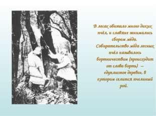 В лесах обитало много диких пчёл, и славяне занимались сбором мёда. Собират
