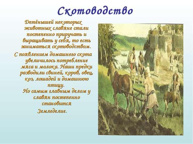 Скотоводство  Детёнышей некоторых животных славяне стали постепенно прируча...
