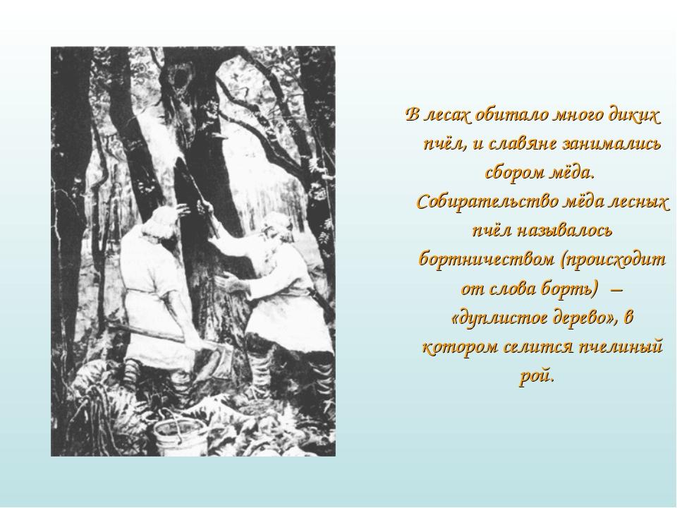 В лесах обитало много диких пчёл, и славяне занимались сбором мёда. Собират...