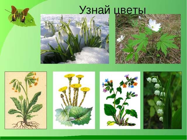 Узнай цветы