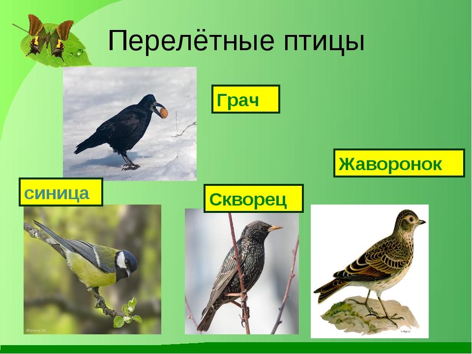 Перелётные птицы Грач Скворец Жаворонок синица