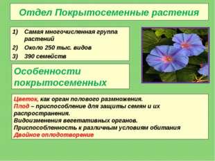 Отдел Покрытосеменные растения Самая многочисленная группа растений Около 250