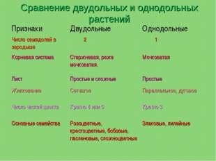 Сравнение двудольных и однодольных растений ПризнакиДвудольныеОднодольные Ч