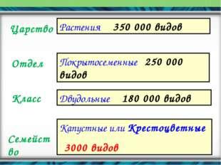Царство Отдел Класс Семейство Растения 350 000 видов Покрытосеменные 250 000