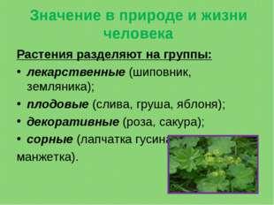 Значение в природе и жизни человека Растения разделяют на группы: лекарственн