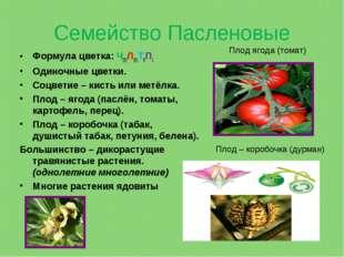 Семейство Пасленовые Формула цветка: Ч(5)Л(5)Т5П1 Одиночные цветки. Соцветие