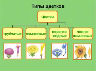 Типы цветков