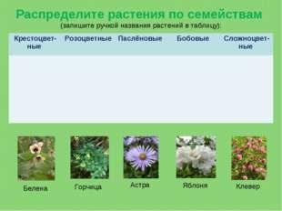 Распределите растения по семействам (запишите ручкой названия растений в табл