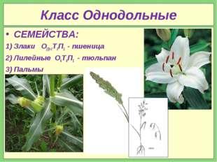 Класс Однодольные СЕМЕЙСТВА: Злаки О(2)+2Т3П1 - пшеница Лилейные О6Т6П1 - тюл