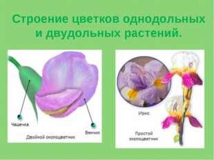 Строение цветков однодольных и двудольных растений.