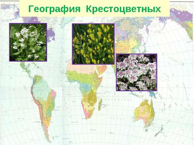 География Крестоцветных