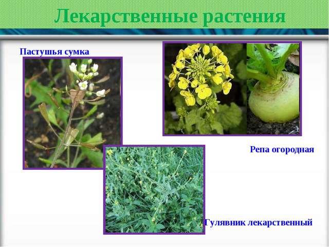 Лекарственные растения Пастушья сумка Репа огородная Гулявник лекарственный