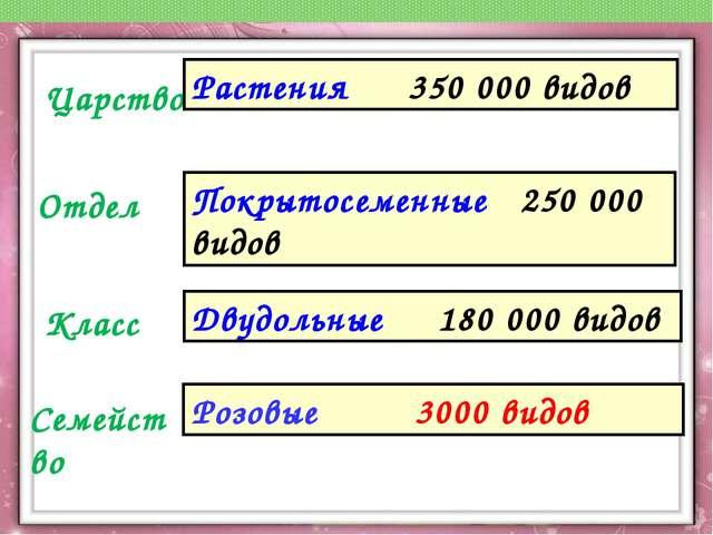 Царство Отдел Класс Семейство Растения 350 000 видов Покрытосеменные 250 000...