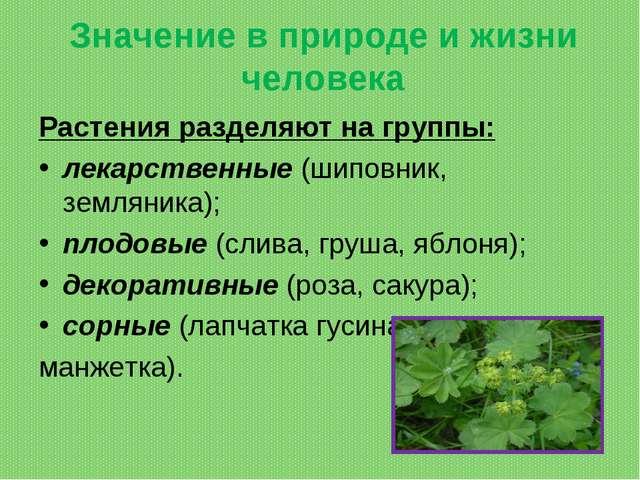 Значение в природе и жизни человека Растения разделяют на группы: лекарственн...