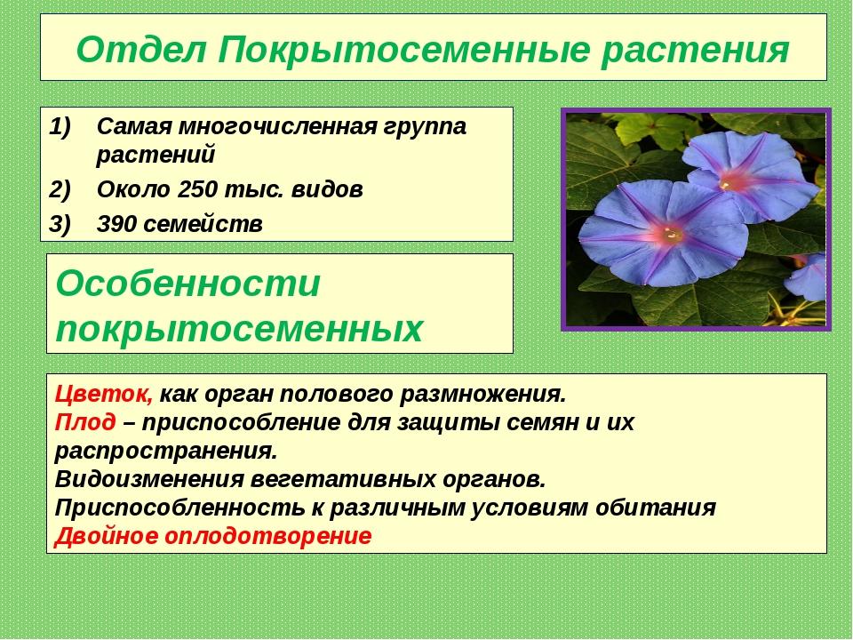 Отдел Покрытосеменные растения Самая многочисленная группа растений Около 250...