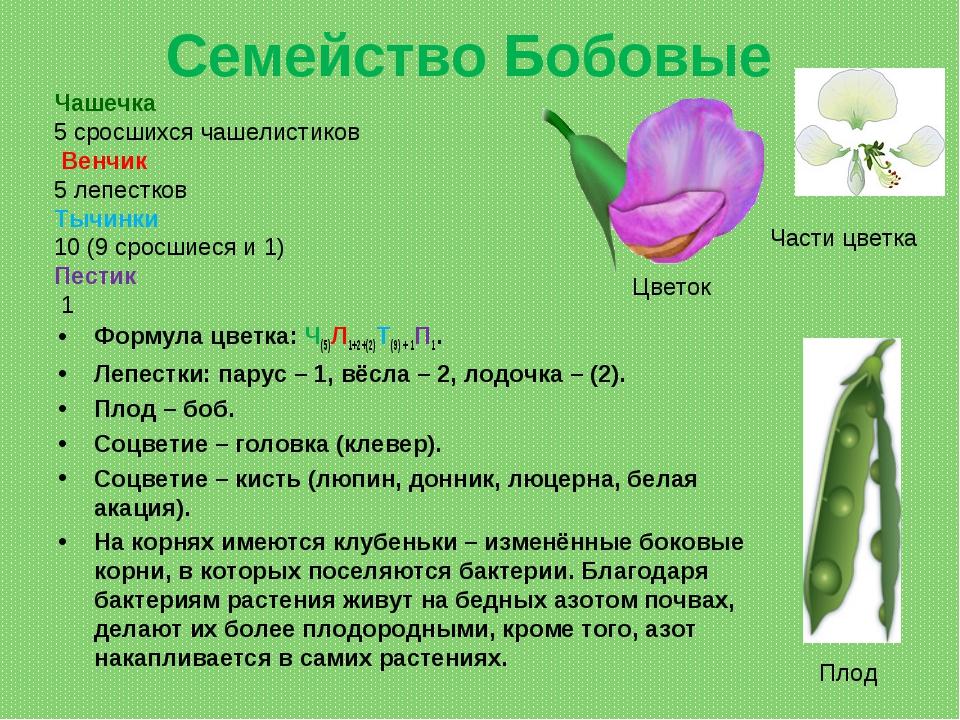 Семейство Бобовые Формула цветка: Ч(5)Л1+2+(2)Т(9) + 1П1. Лепестки: парус– 1...