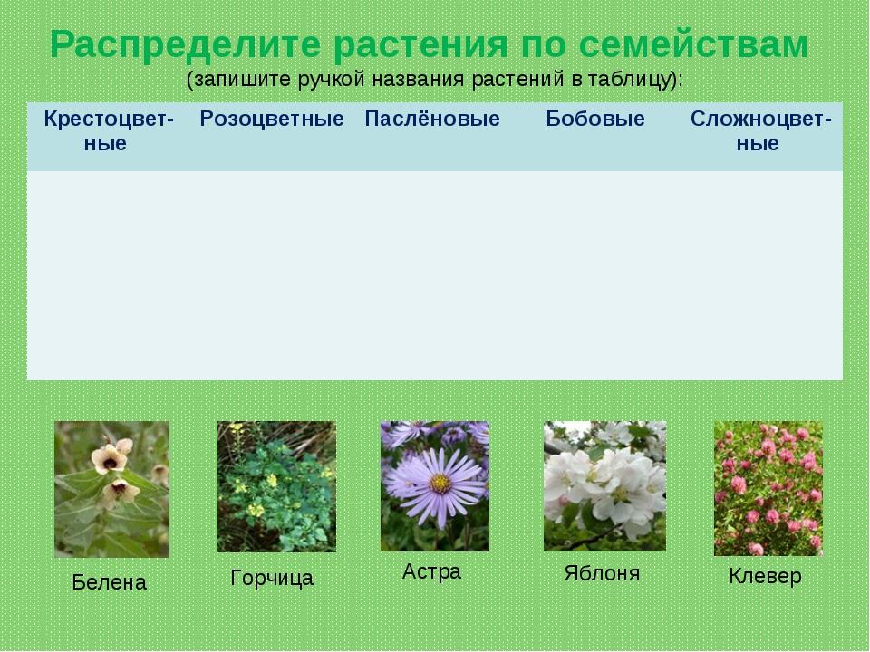 Распределите растения по семействам (запишите ручкой названия растений в табл...