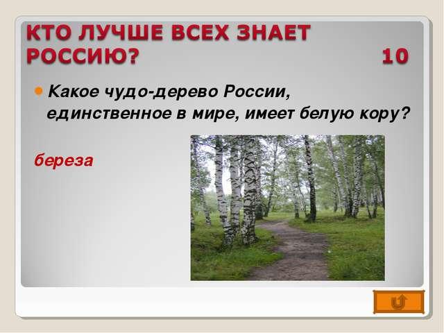 Какое чудо-дерево России, единственное в мире, имеет белую кору? береза