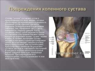 """Основу """"колена"""" составляет сустав и прикрепляющиеся к нему мышцы, которые обе"""