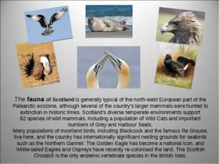 The fauna of Scotland is generally typical of the north-west European part of