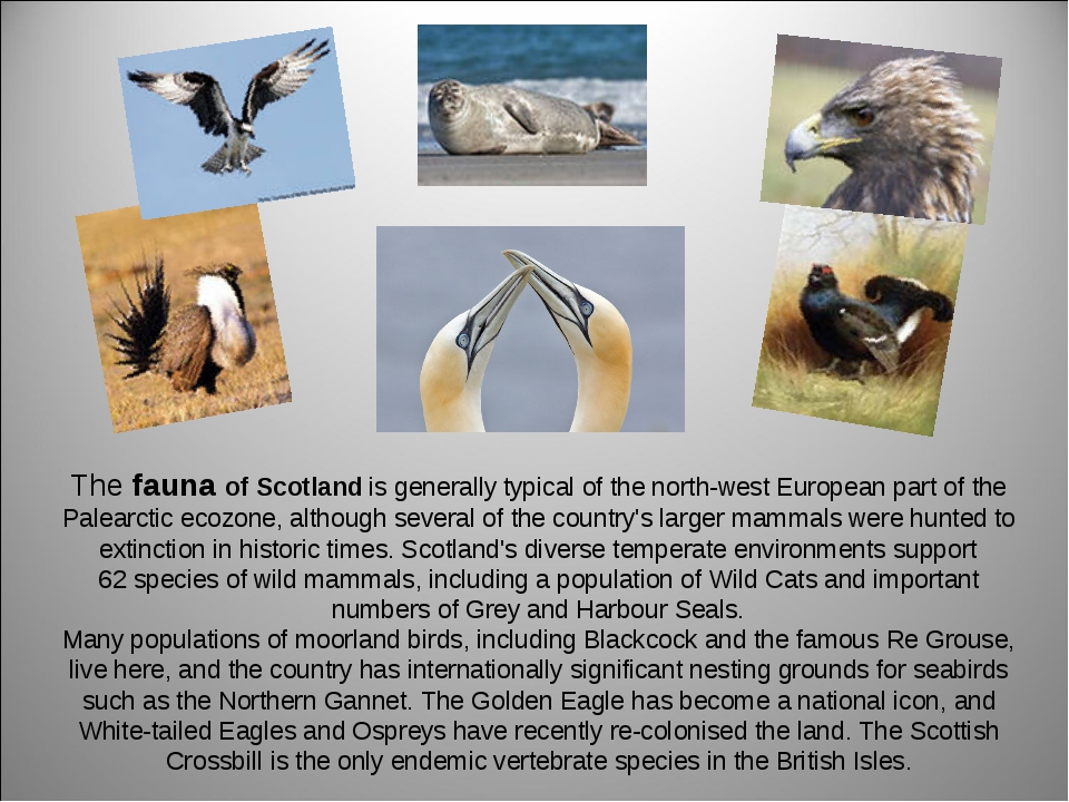 The fauna of Scotland is generally typical of the north-west European part of...