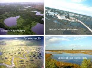 Долина реки Пур Среднеобская низменность Тазовский полуостров месторождение М
