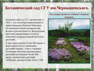 Ботанический сад СГУ им.Чернышевского. Ботанический сад СГУ организован в 195