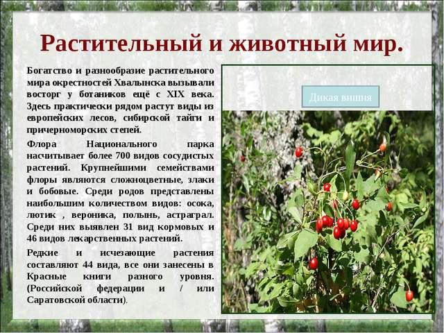 Растительный и животный мир. Богатство и разнообразие растительного мира окре...